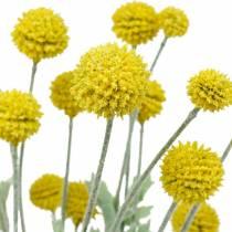 Fiori di seta Craspedia artificiali gialli con bacchetta