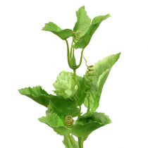 Ramo di luppolo 70 cm verde 2 pezzi