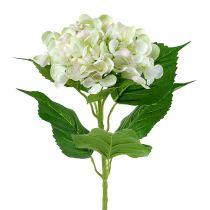 Ortensia Bianco-Verde 60cm