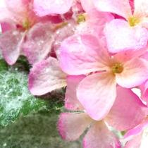 Ortensia rosa con effetto neve 25 cm