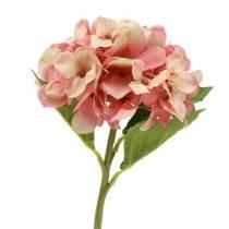 Ortensia beige/rosa 35cm