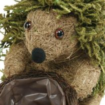 Riccio con cesto verde, decorazione autunnale per piantare, cesto decorativo per piante H24cm Ø9,5cm