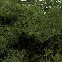 Muschio renna verde muschio 400g