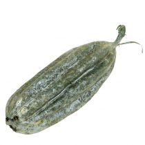 Luffa Fruit Green 14cm 10 pezzi