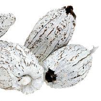 Frutti di cacao lavati bianchi 15St