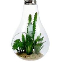 Cactus nel bicchiere per appendere 21 cm