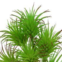 Rami di cactus 20 cm verde chiaro 3 pezzi