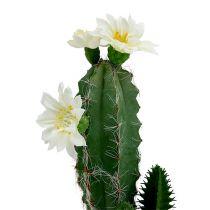 Cactus in vaso con fiore 21 cm bianco