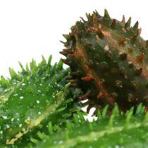 Fichi d'India 5 cm verde-marrone 6 pezzi