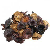 Fungo Kalix decorazione funghi secchi laccati naturali grandi 50pz
