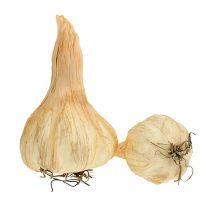 Crema all'aglio 7,5-11 cm 5 pezzi