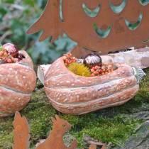 Zucca da piantare arancione 28 × 15 × 14 cm
