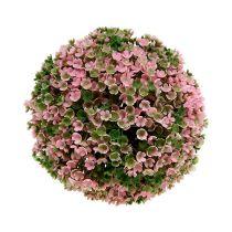 Pianta palla rosa-verde Ø18cm 1p