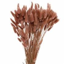 Fioraio secco coda di coniglio erba Lagurus rosso-marrone 100g