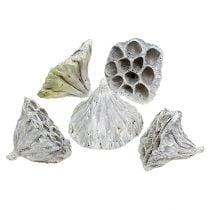 Lotos medio naturale satinato 50p
