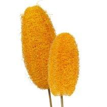 Luffa grande su stecco giallo dorato 25pz
