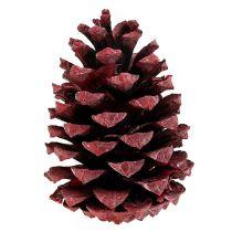 Coni Maritima 10-15 cm rosso satinato 12 pezzi
