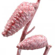 Coni marittimi su ramo rosa/bianco cerato 400g