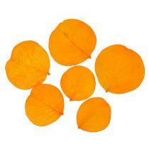 Monetablätter giallo dorato 50g