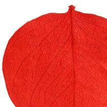 Moneta foglie rosse 50g