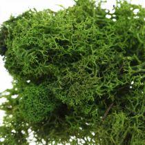 Muschio decorativo per artigianato muschio naturale verde scuro conservato 40g