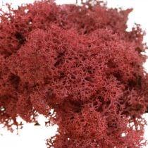 Muschio decorativo per artigianato Muschio naturale rosso colorato in busta da 40g