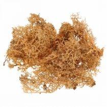 Muschio decorativo per artigianato Muschio naturale color arancio stabilizzato 40g