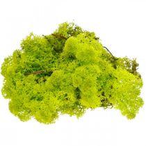 Muschio decorativo muschio di renna verde chiaro conservato in materiale artigianale 400g