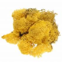 Muschio renna muschio giallo 400g