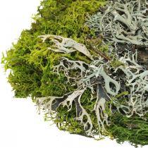 Muschio decorativo per artigianato Mix di muschio e lichene verde, grigio 100g