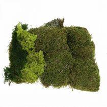 Muschio decorativo per artigianato mix verde, verde chiaro muschio naturale 100g