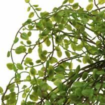Cespuglio verde di Muehlenbeckia 42 cm