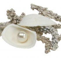 Miscela di conchiglie con perla e legno bianco 200g
