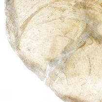 Decorazioni da spiaggia, conchiglie Capiz 5–10 cm, oggetti naturali, madreperla, marittimo 1 kg