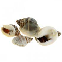 Decorazione naturale, gusci di lumaca naturale 1–2 cm, decorazione a conchiglia 1 kg