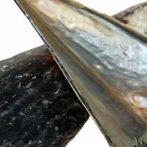 Conchiglie Nere 24-30 cm 1 kg