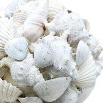 Sfera a conchiglia bianca Ø10cm