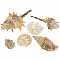 Shell mix naturale assortito 260g