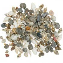 Guscio di lumaca deco mini natura mix decorazione marittima 1kg