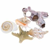 Shell mix naturale assortito 5pz
