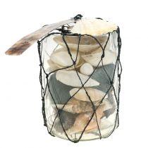 Mix di cozze in vetro H11,5cm