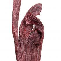 Miscela di legno di corna Natraj rosso, bianco lavato 10 pezzi