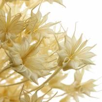 Baccello di semi di fiori secchi Cumino nero sbiancato 80g