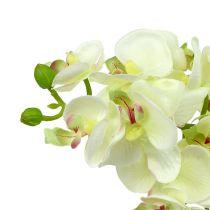 Orchidea verde chiaro 56cm 6 pezzi