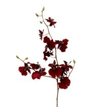 Orchidea Oncidium 70cm Rosso scuro 3 pezzi