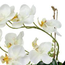 Phalaenopsis di orchidea su crema sospesa H26cm