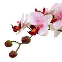 Orchidea rosa in vaso di ceramica 31cm