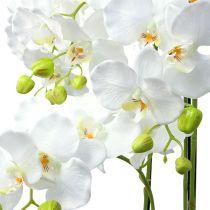 Orchidea bianca con globo 110cm