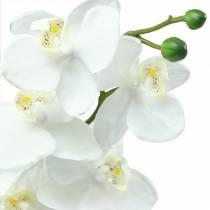 Orchidea bianca 77cm