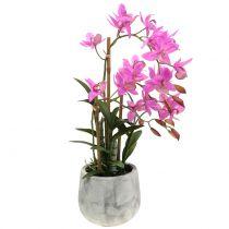 Orchidea in vaso viola H55cm